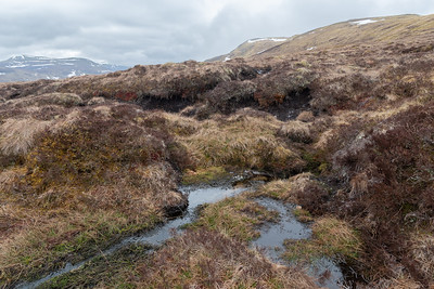 On the way up a stretch of peat bog