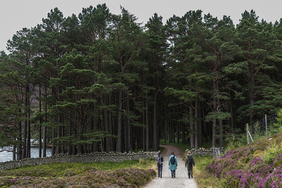 The pines around Glas-allt Shiel house