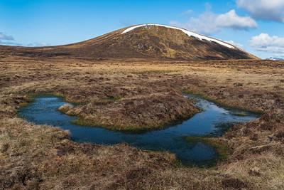Beauty of bogs