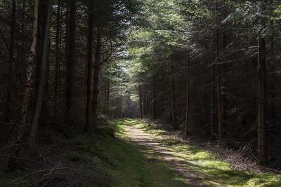 Tearie Farm paths April 2020