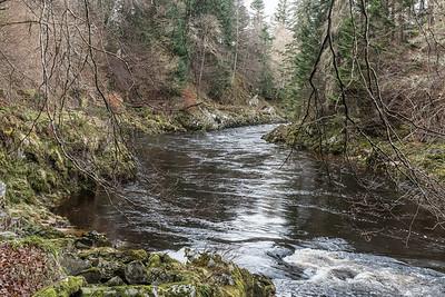 Through the Scottish jungle