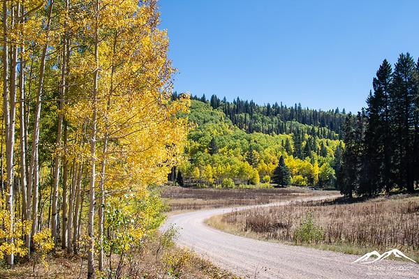 Four Mile Road