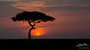 Image #1259 <br /> <br /> January 21, 2020; Olare Motorogi Conservancy <br /> <br /> Kenya Safari 2020 - Evening Drive<br /> <br /> Mandatory Credit: Dale Grosbach-Dale G Sports