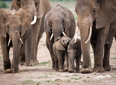 Elephant Family - Amboselli National Park, Kenya