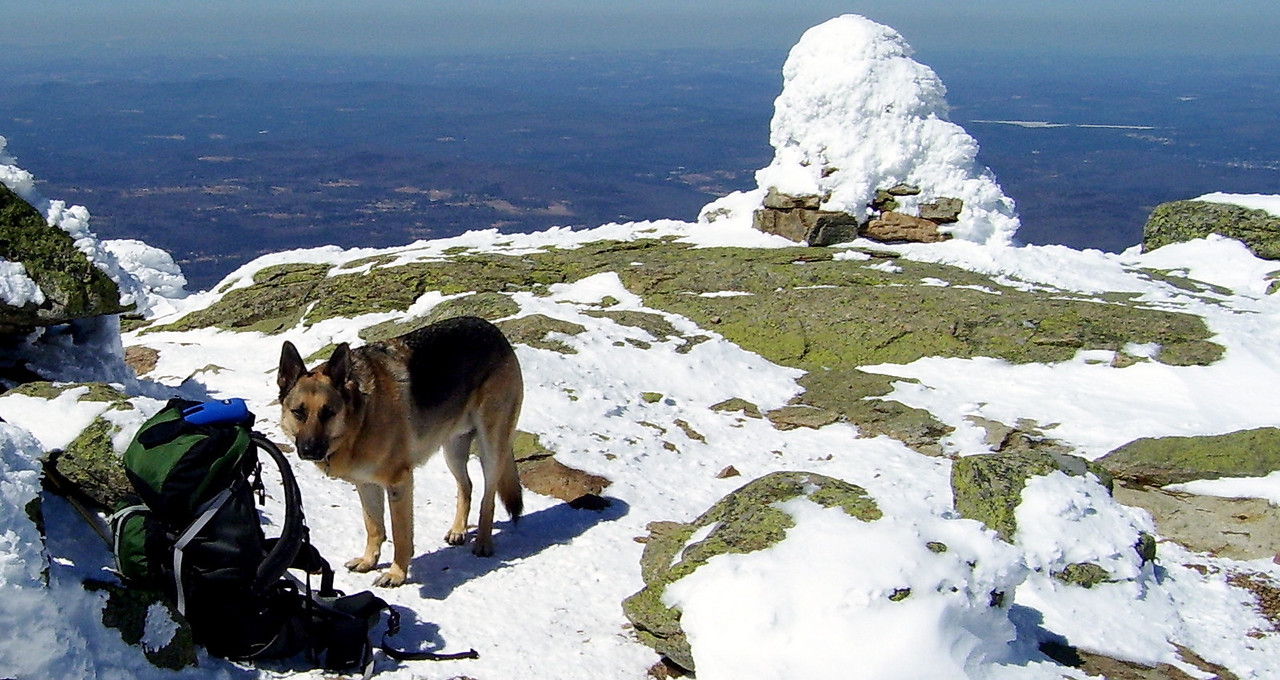 Bubba and Frozen Cairn on the Summit of Mt. Lafayette