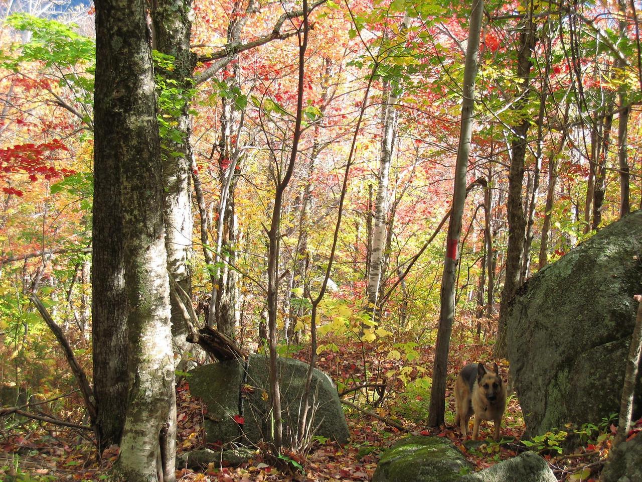 Leaf Peeping on Mt. Sunapee