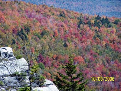Autumn Color, close