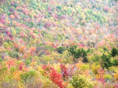 Autumn Shades, Closeup