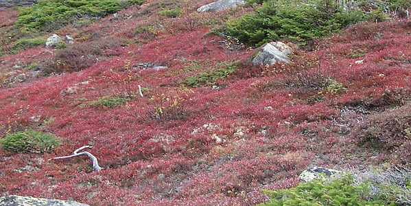 The Red Red Moss of Fall