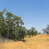 Hilltop of California Oaks
