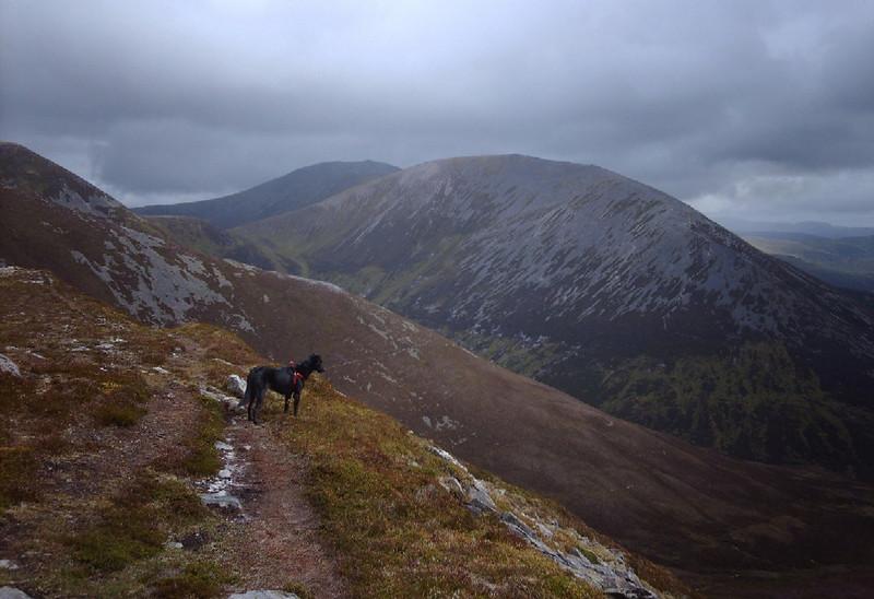 Judy Shand spots a herd of deer from Beinn a'Ghlo.
