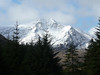 Ben Lui from the forest near Tyndrum