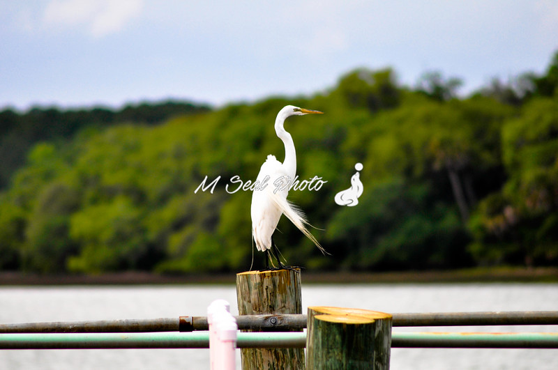 egret on post