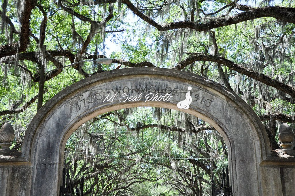 wormsloe plantation gate, savannah ga