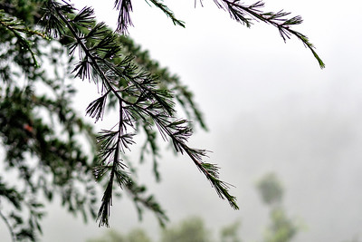 McLeod Ganj, Dharamshala Himachal Pradesh India