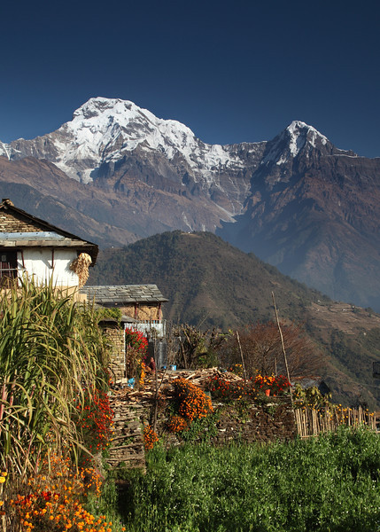 Annapurna South; ubiquitous marigolds add colour to the walls.