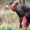 Woman tending her veggie patch on the Lukla to Namche Bazar trail