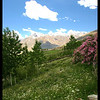 Lush pastures near Karcha, Zanskar region of India