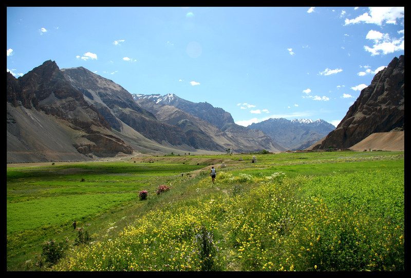 Walking up the lower Zanskar river meadows with all the flowers out is quite an experience.