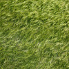 Chhusang barley patterns
