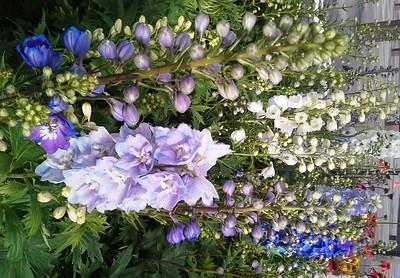 Perennials 9-22-17