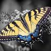 Butterfly Palette