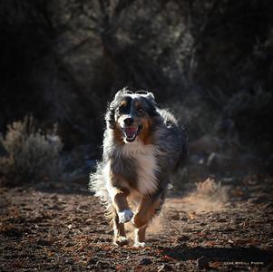Hippie on the run