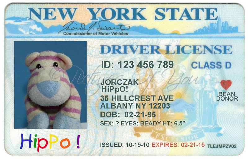 ok.....I couldn't resist making HiPpO! his own driver's license.  He loves to drive....now he thinks it's official....ssshhhh...don't tell him the truth.