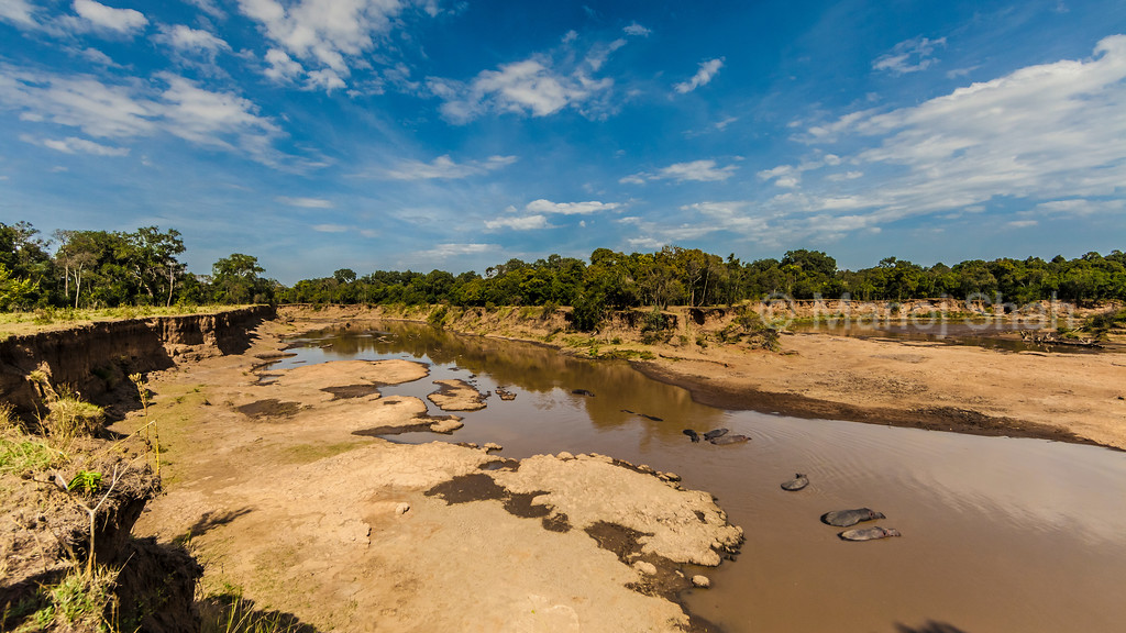 Hippos sun bathing in Mara River