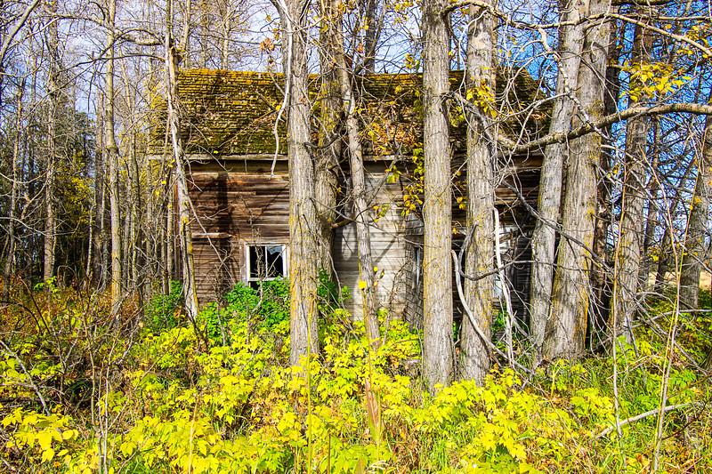 the Daffodil Home