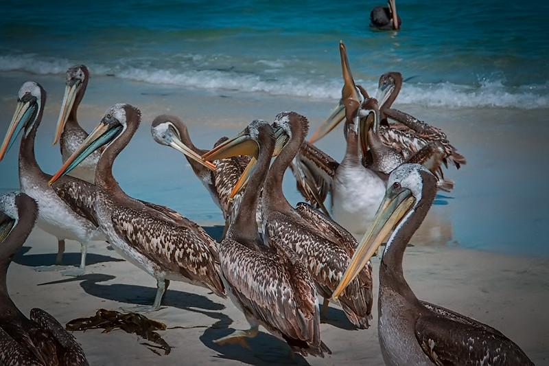 Pelicanos, Algarrobo '80s