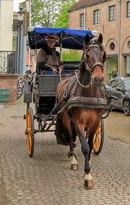 The horses in Bruges had some fine markings.