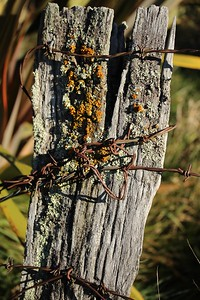 Old Style Fence Post
