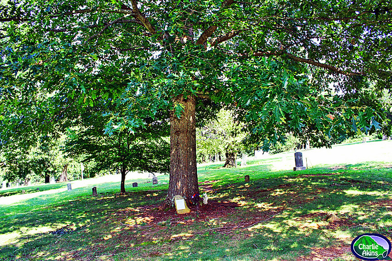 This oak tree honors those who served in the Vietnam War.