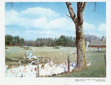 Rosmore Turkey Farm, circa 1960