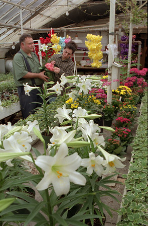 98/04/09 Easter Flowers No.2 *Dennis Stierer photo -  Ernie Orgar, Owner of Muchows Florist Shop in Medina and Rhonda Grammatico, office manager check out the Easter Lilies that are set to go out.