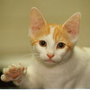 7/17/97 Pet of the Week - James Neiss Photo