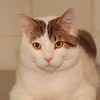 2/20/97 Pet of the Week - James Neiss Photo