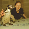 "98/02/25-- penguin print --Takaaki Iwabu photo-- A 9-year-old Penguin ""Opus"" leaves his feet prints on a paper as aquarist Michele Long assist him.  This art work by penguins at Aquarium Niagara will be auctioned at March 12th Seasonnings of Niagara for a fund raise.  <br /> <br /> Friday, attraction, color"
