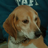 98/12/10 Pet of the Week - James Neiss Photo -
