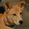 98/09/10 Pet of the Week - James Neiss Photo