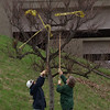 4/22/97--BFLO AVE CLEAN UP--DAN CAPPELLAZZO PHOTO--OXY EMPLOYEES VIKKI HIRSCHEY AND KAREN FRIEDER USE BROOM AND SHOVEL TO UNTANGLE A CAUTION LINE FROM A TREE ON BLFO AVE DURING A CLEAN OF THE AREA.<br /> <br /> LOCAL