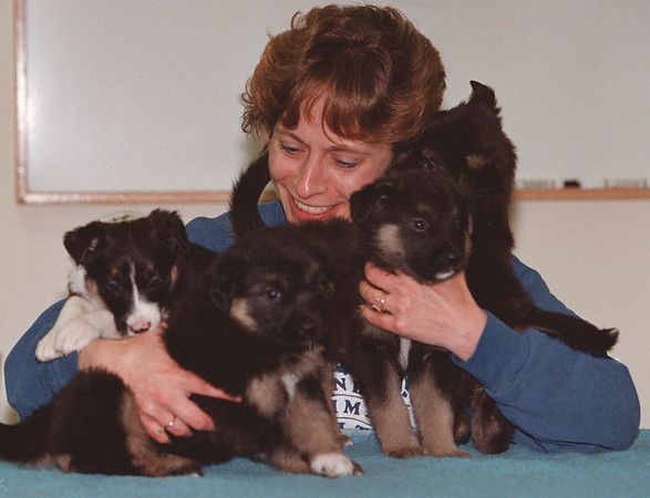 5/22/97--SPCA  PUPPIES--DAN CAPPELLAZZO PHOTO--DONNA FROM THE NIAGARA COUNTY SPCA CRADLES 4 PUPS THAT SURVIVED A FIRE, BUT THE MOTHER DIED, THE NIAGARA COUNTY CHAPTER AHS BEEN RAISING THE PUPS.<br /> <br /> FEATURE  WED.