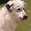 5/22/97--pet of week--dan cappellazzo photo--see attached sheet.<br /> <br /> grapevine