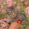 9/11/97--pet of the...--Takaaki Iwabu photo-- info attached