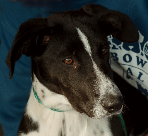 97/11/13 Pet of the Week - James Neiss Photo