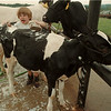 98/08/05 County Fair - James Neiss Photo - Moooove over was on the mind of Brynn Worley, 8yrs old of Olcott, who was cleaning up her Holstein cow for the 4H Dairy Cattle Clover Buds competition.