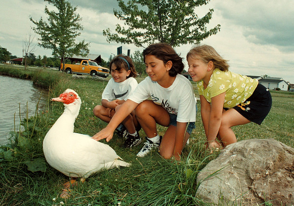 """7/22/97-- Tame duck--Takaaki Iwabu photo-- Tame duck """"Cliff"""" has lived in Fairmont Park last five years after locals saved him life. Watching him are, from left, Nicloe Nanula, 8, Kerri Nanula and Jillian Swogier. <br /> <br /> tmc photo"""