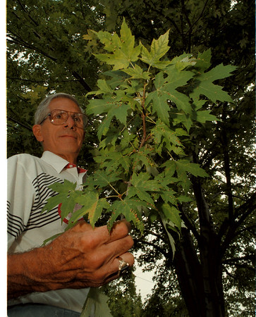 98/08/14 Leaf Diseases - James Neiss Photo - Tony Gara Shows a branch of leaves infested with some kind of disease.