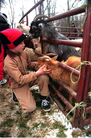 98/03/13 Pet Zoo-Rachel Naber Photo-At Ransomville Elemenatry Shawn Bailey a fourth grader enjoys peting the goats brought to celebrate the schools PARP success.